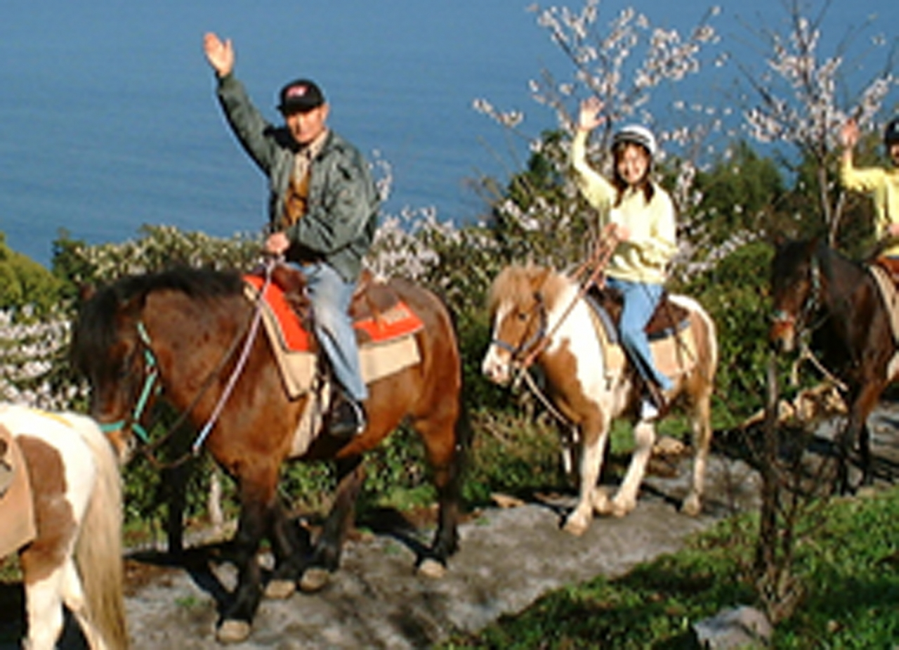 Beginner horseback riding experience (external link)
