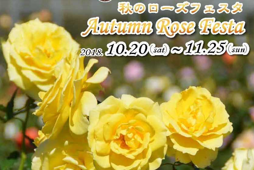 Autumn Rose Festa