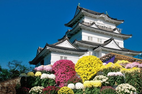 The 70th Odawara-jo Castle Chrysanthemum flower exhibition