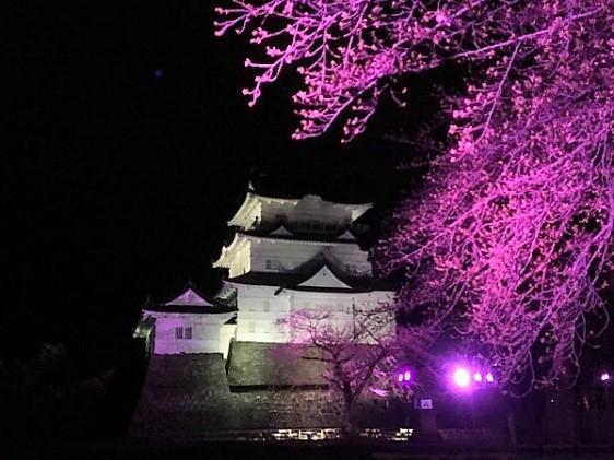 本丸広場桜ライトアップ